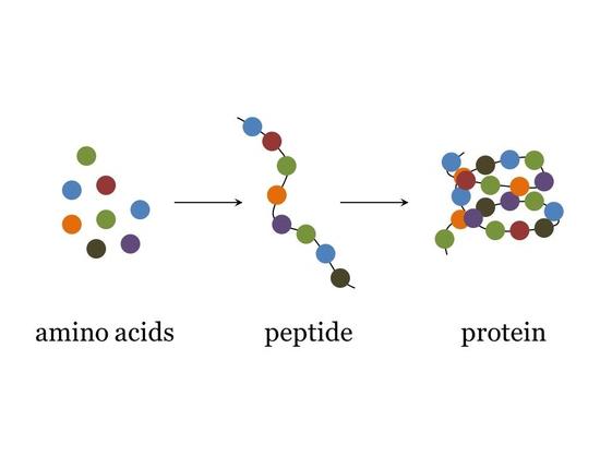 peptides Vs amino acids